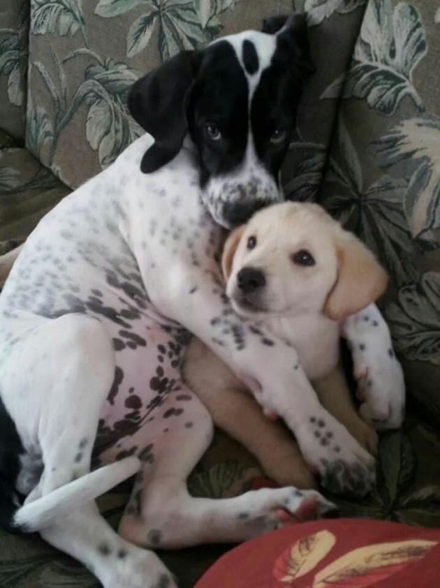 Dog bro hug