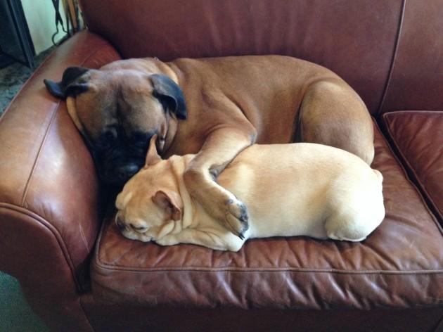 Dog bro nap
