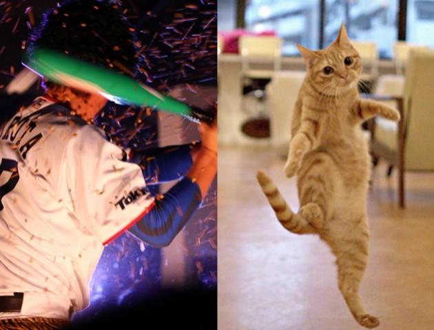 CatBeans!
