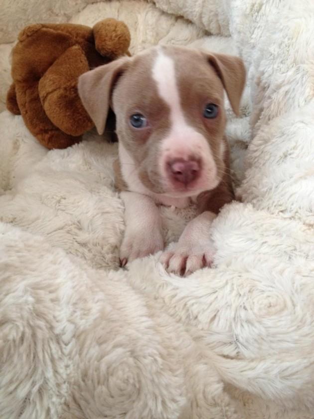 Basic puppy